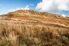 Roh kulle på hösten Polonina Wetlinska i Bieszczady berg i Polen Arkivfoto