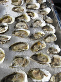 Rohe Austern auf Eis Stockfoto