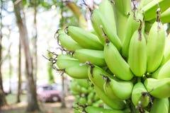 Rohe Banane Lizenzfreie Stockfotos