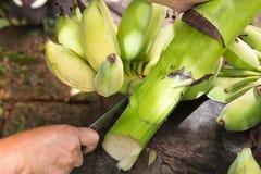 Rohe Banane schnitt mit Messer in der Hand auf hölzerner Tabelle Stockbild