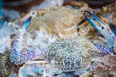 Rohe blaue Krabben auf Eis Lizenzfreies Stockbild