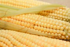 Rohe Corn Flakes stockbild