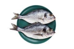 Rohe dorado Fische auf der grünen Platte lokalisiert über weißem Hintergrund Beschneidungspfad eingeschlossen Stockbild
