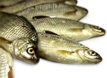 Rohe Fische Stockfotos