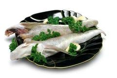 Rohe Fische Stockfoto