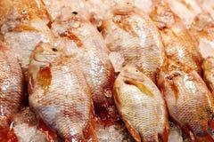 Rohe Fische auf Eis am Markt Stockfotografie