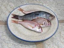Rohe Fische auf Platte Stockfotografie