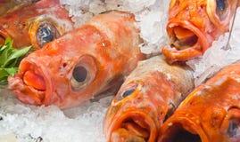 Rohe Fische im Eis Stockbild