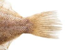 Rohe Fische irren umher, binden Nahaufnahme an stockfotografie
