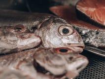 Rohe Fische mit großen Augen stockbild