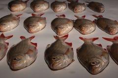 Rohe Fische rudd Lizenzfreies Stockbild