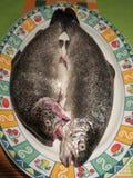 Rohe Forellen auf einer Platte kochfertig Stockfotos