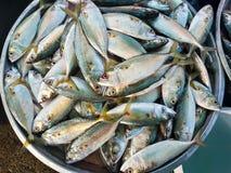 Rohe frische Fische im Markt Stockbilder