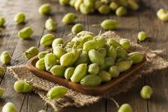 Rohe frische organische grüne Kichererbsen-Bohnen Stockbild