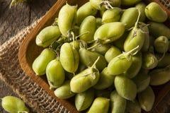 Rohe frische organische grüne Kichererbsen-Bohnen Stockbilder