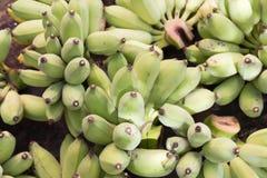 Rohe grüne Banane im Garten Lizenzfreie Stockfotos