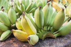 Rohe grüne Banane im Garten Stockbilder