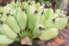 Rohe grüne Banane im Garten Lizenzfreies Stockbild