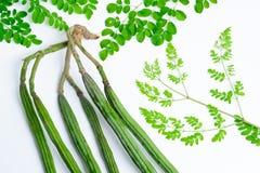 Rohe grüne Farbe Moringas Stockbild