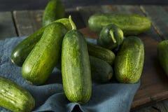 Rohe grüne organische Essiggurken-Gurken Stockbild