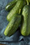Rohe grüne organische Essiggurken-Gurken Stockfotos