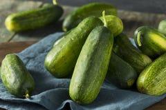 Rohe grüne organische Essiggurken-Gurken Lizenzfreie Stockfotografie