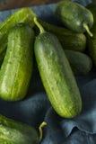 Rohe grüne organische Essiggurken-Gurken Lizenzfreies Stockfoto