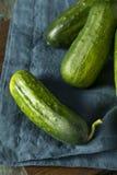 Rohe grüne organische Essiggurken-Gurken Lizenzfreie Stockfotos