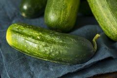 Rohe grüne organische Essiggurken-Gurken Stockfotografie