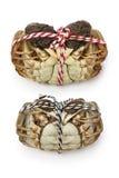 Rohe haarige Krabben Shanghais (Mann und Frau) Stockbild