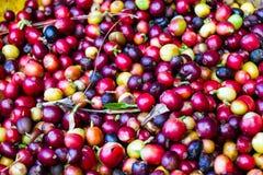 Rohe Kaffeebohnen lizenzfreies stockfoto