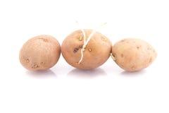 Rohe Kartoffeln Stockbilder