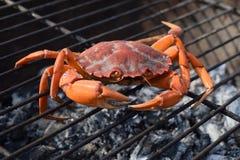 Rohe Krabbe auf dem Grill mit Holzkohle Stockfotografie