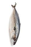 Rohe Makrele auf Weiß Lizenzfreies Stockfoto