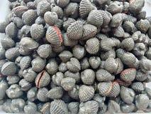 Rohe Meeresfrüchte der Miesmuscheln Lizenzfreies Stockfoto
