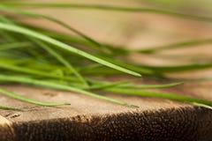Rohe organische grüne Schnittlauche Lizenzfreies Stockbild