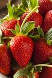 Rohe organische lange Stamm-Erdbeeren Lizenzfreie Stockfotos