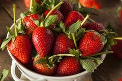Rohe organische lange Stamm-Erdbeeren Stockfoto