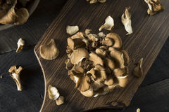 Rohe organische Maitake-Pilze Stockbilder
