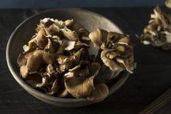 Rohe organische Maitake-Pilze Stockfoto