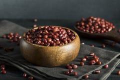 Rohe organische rote Adzuki-Bohnen Stockfoto
