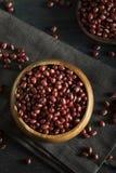 Rohe organische rote Adzuki-Bohnen Lizenzfreie Stockbilder