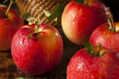 Rohe organische rote Gala Apples Lizenzfreie Stockfotografie