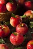 Rohe organische rote Gala Apples Stockfoto