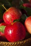 Rohe organische rote Gala Apples Stockbild