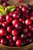 Rohe organische rote Moosbeeren Stockfotografie