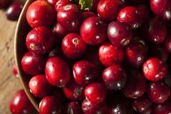 Rohe organische rote Moosbeeren Lizenzfreie Stockfotos