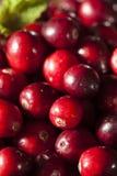 Rohe organische rote Moosbeeren Stockfotos