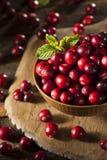 Rohe organische rote Moosbeeren Lizenzfreies Stockfoto