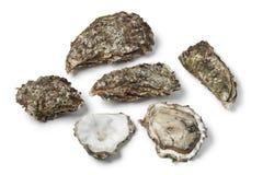 Rohe pazifische Austern Stockbild